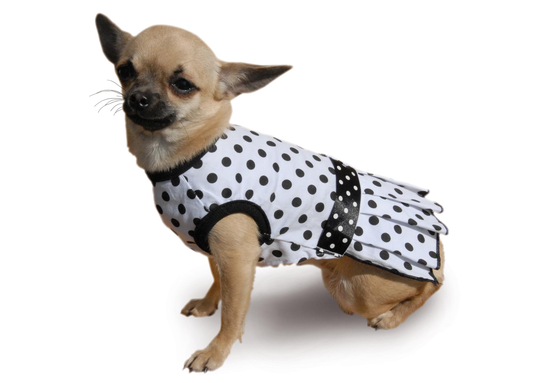 Max+Co Robe Poka Dot Vêtements Pour Chiens