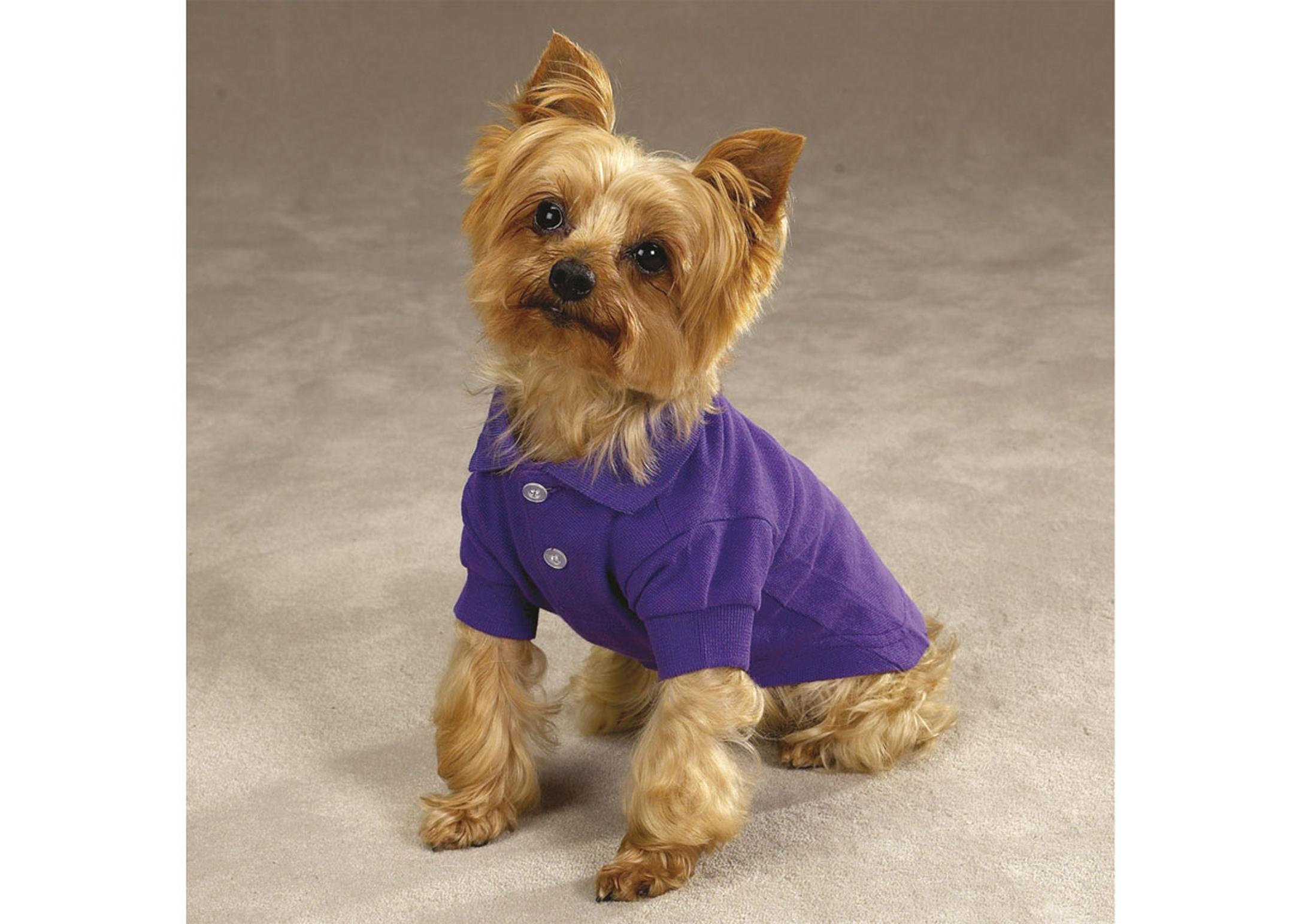 Zack & Zoe Zack&Zoey Polo Shirt Attire For Dogs
