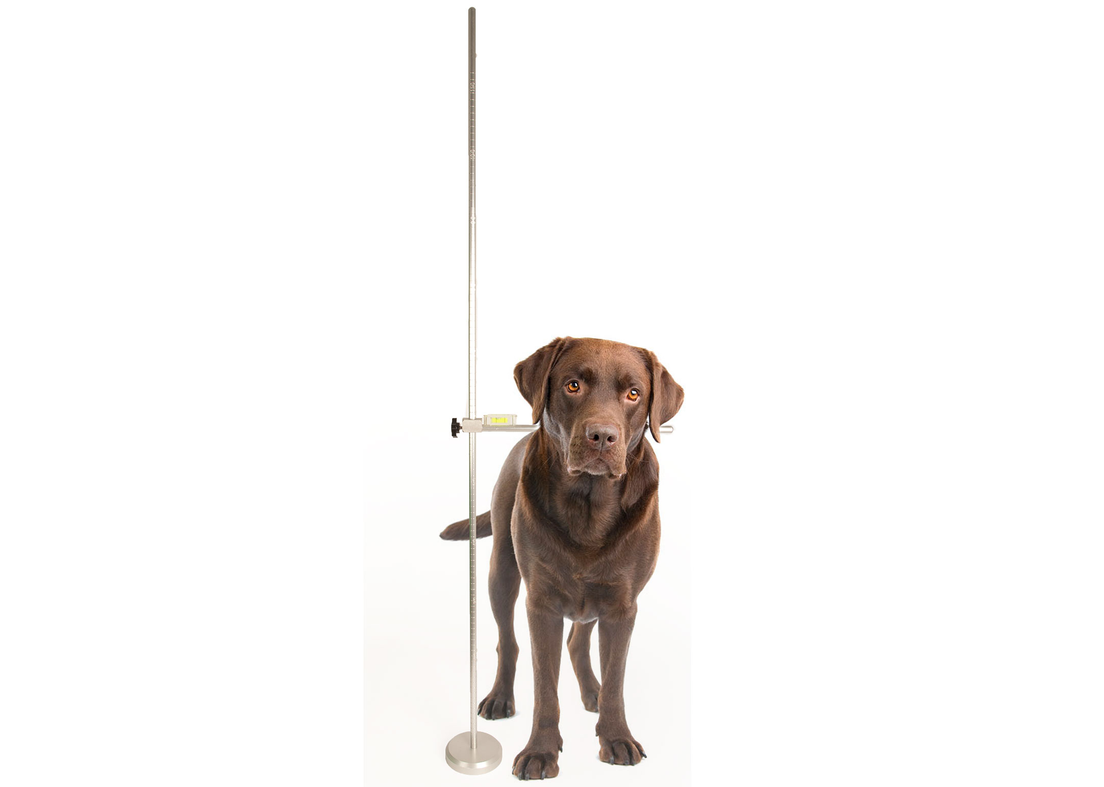 Show Tech Adjustable Dog Measure