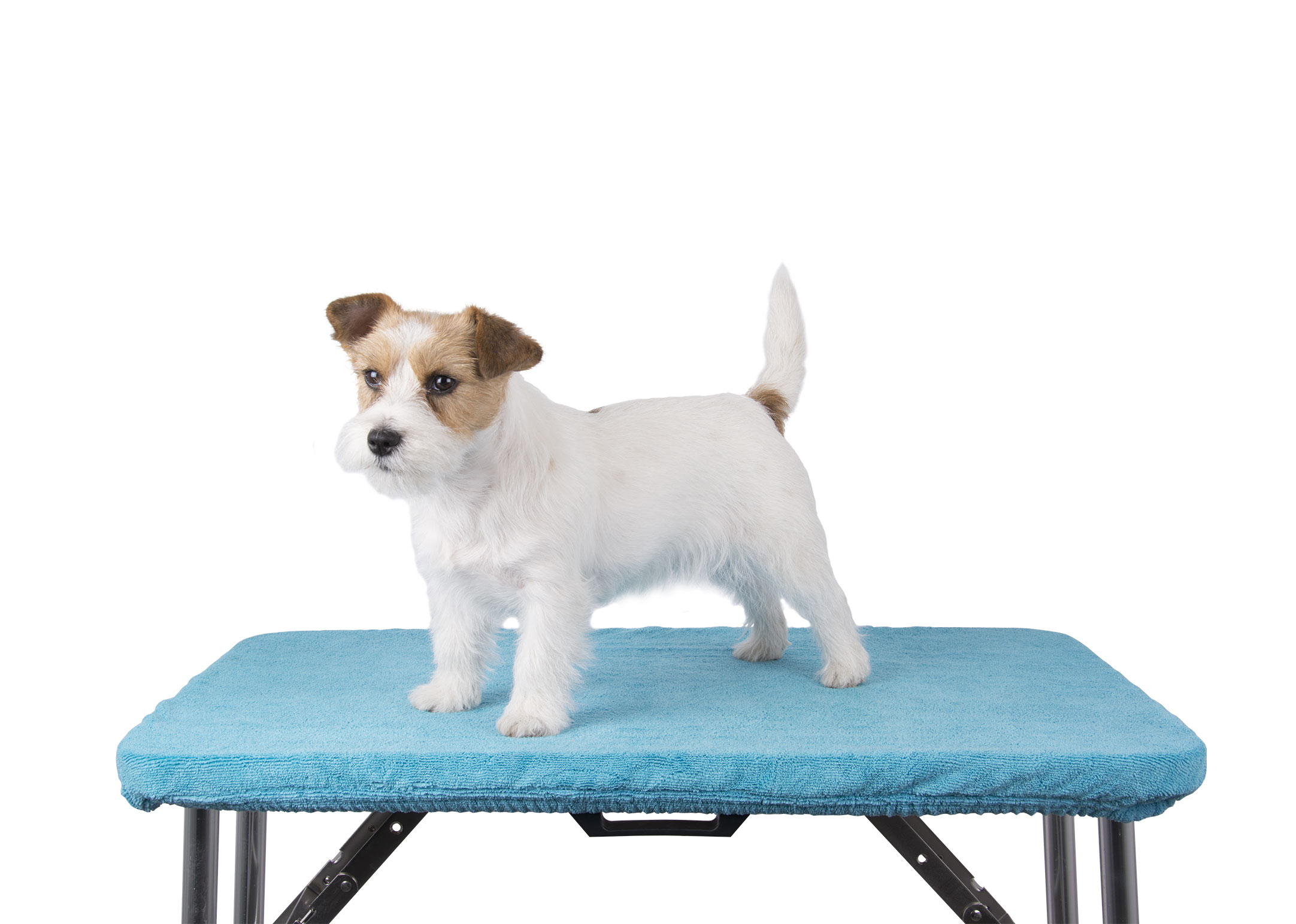 Show Tech+ Table Toga Turquoise Table Cover for Grooming Table