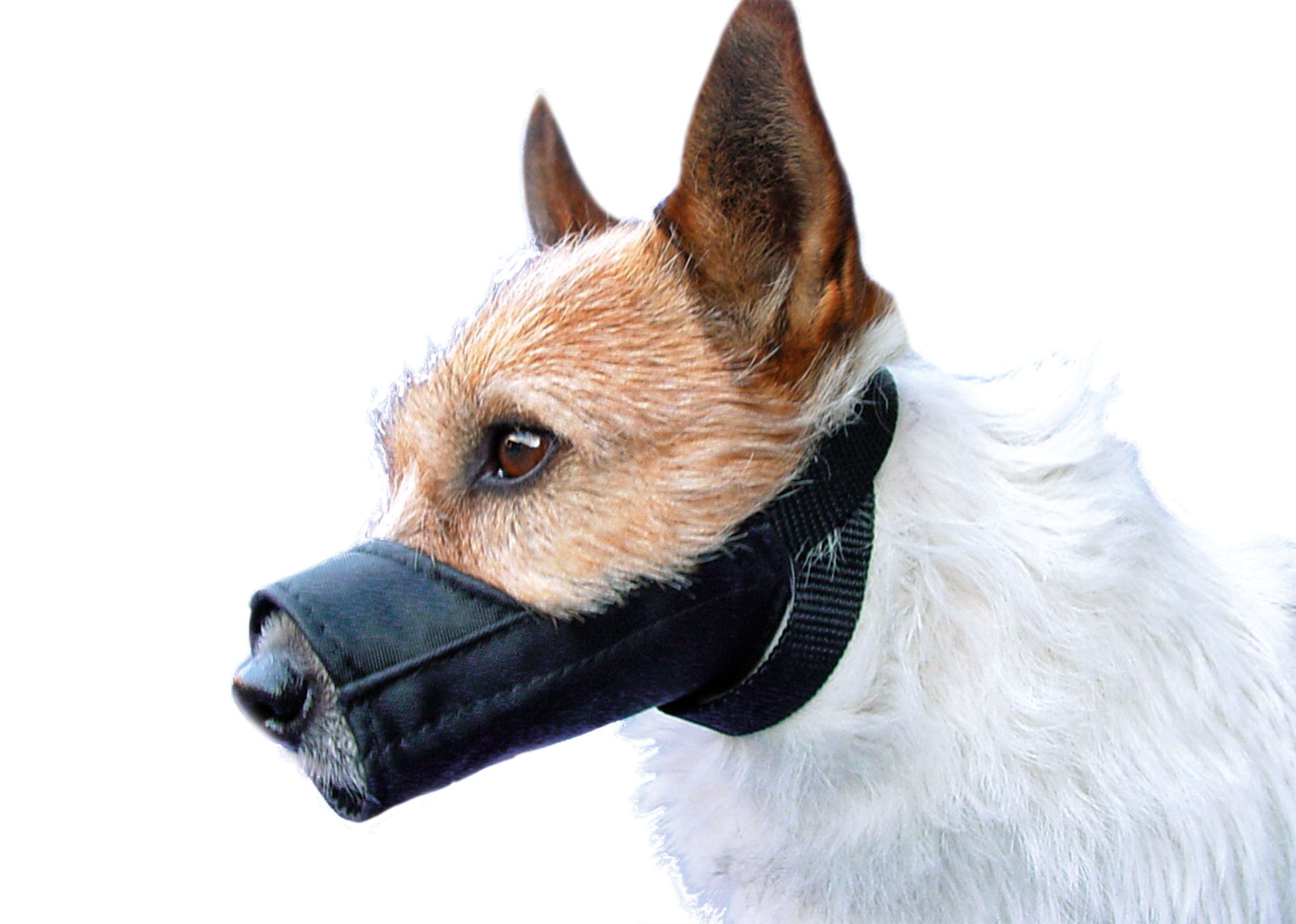 Show Tech Muzzle Nylon For Dogs