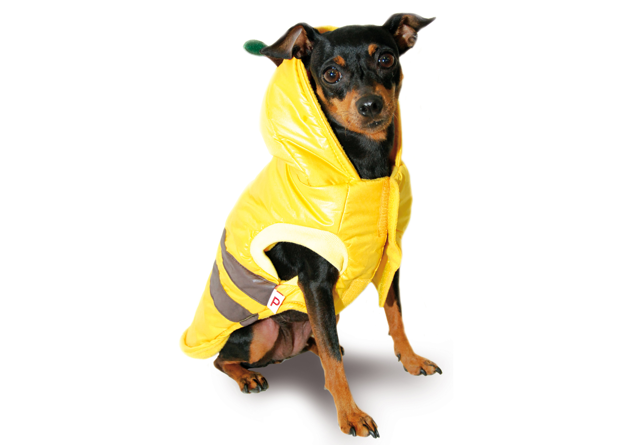 Max+Co Bee Jacket Yellow Attire For Dogs