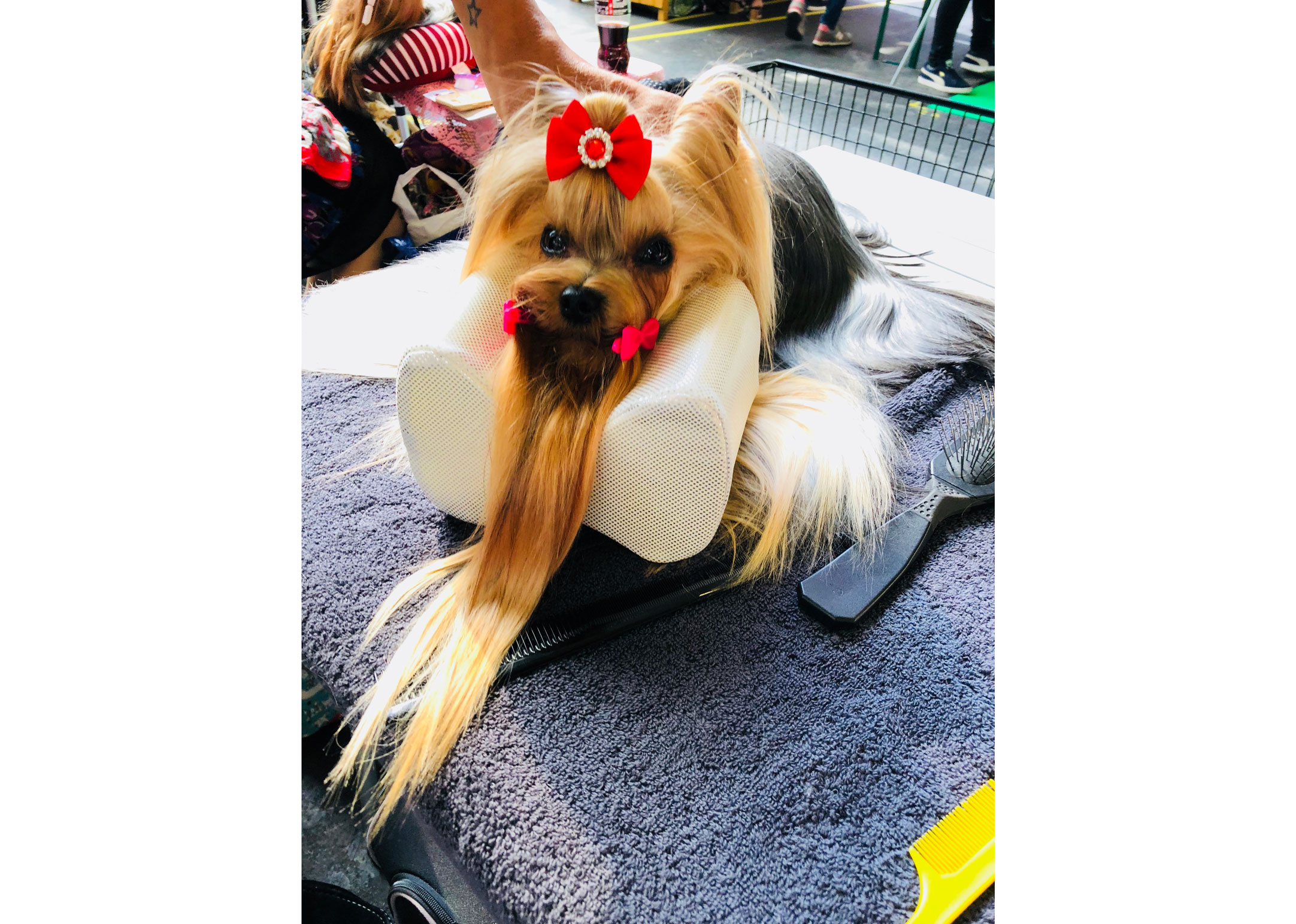 Show Tech Comfy Groom Small Pillow For Top Knot Transgroom Pet Care Professionals