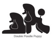 Double poodle puppy (L)