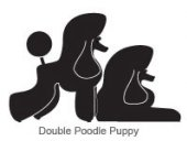 Double poodle puppy (R)