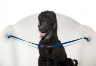 Groom-X Bath Restraint with Double Suction For Dogs