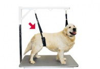 Show Tech Comfort Belly Strap for Dogs