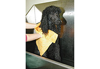 Metro Moisture Magnet Pet Towel 70x50cm Pet Towel For Dogs And Cats