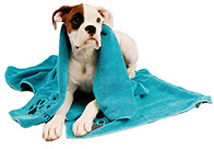 Show Tech+ Microfibre Towel with Embroidery 56x90cm Pet Towel For Dogs And Cats