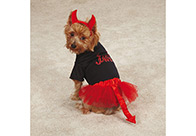 Casual Canine Halloween Lil' Devil Costume  Attire For Dogs