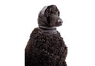 Show Tech Snood Small Ear Covers For Dogs