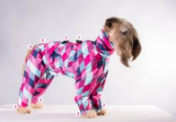 Show Tech Waterproof Trouser Suit - Short Legged Harlequin Limited Edition