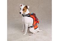 Zack & Zoe Safety Vest with Holder Drink M 30-40cm Attire