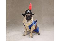 Zack & Zoe Halloween Costume Pirate Pup Attire For Dogs