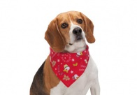 Aria Xmas Peppermint Twist Bandana 48x48 cm Bandana For Dogs