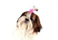 Show Tech Satin Flower Bows with Elastic 50 pcs Bows For Dogs
