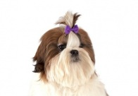 Show Tech Multicolor Bows with Elastic 50 pcs Bows For Dogs