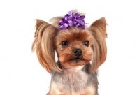 Show Tech Curly Bows with clip 6 pcs Bows For Dogs