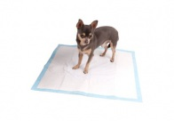 4Pups Puppy Trainer Pads 60x60cm 10pcs House-Training Aid