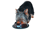 Show Tech Anti Skid Dish Brown Feeding Bowl For Dogs