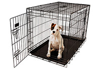 Show Tech American Cage Black with Plastic Tray Cage For Dogs