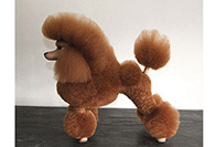 Show Tech Model Dog Brown Educational Dog For Groomers