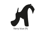 Kerry blue (R)