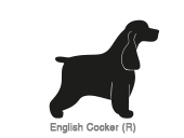 English Cocker (R)